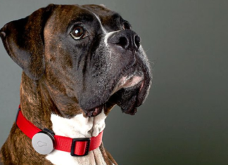 GPS Trackers For Pets